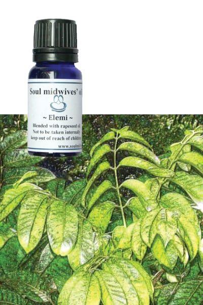 Soul Midwives Oil - Elemi