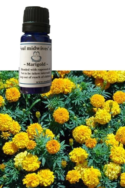 Soul Midwives Oil - Marigold