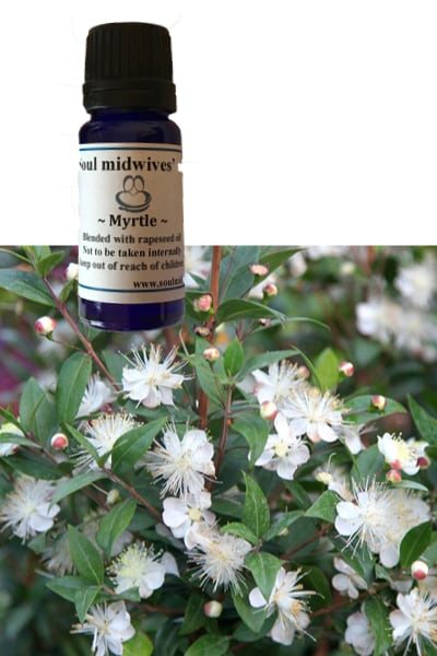 Soul Midwives Oils - Myrtle